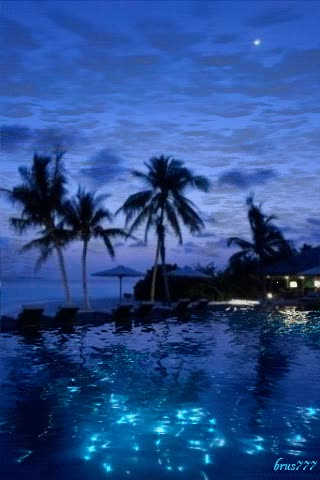 Watch paysage paradisiaque, crepuscule, palmier, piscine GIF on Gfycat. Discover more related GIFs on Gfycat