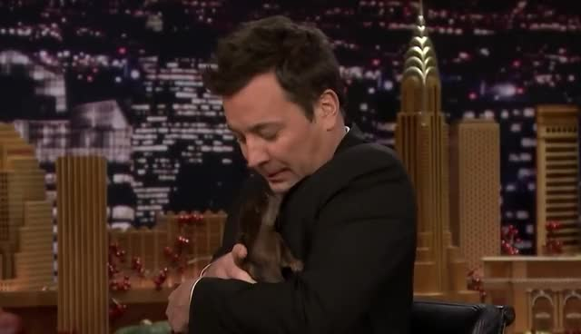 Watch this curated GIF by GIF Queen (@ioanna) on Gfycat. Discover more afraid, animal, cute, fallon, funny, god, irwin, jimmy, lol, my, oh, omg, please, robert, scared, show, sweet, tonight, weird, wtf GIFs on Gfycat