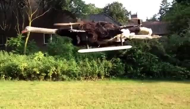 Watch Stuffed ostrich drone is a thing now GIF on Gfycat. Discover more ostrich GIFs on Gfycat