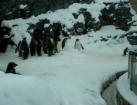 Watch and share Happy Feet GIFs and Dancing GIFs on Gfycat