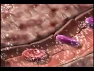 Watch and share Oxygen Transport From Lungs To Cells GIFs on Gfycat
