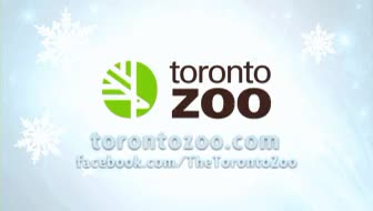 Watch and share Toronto Zoo GIFs and Panda GIFs on Gfycat