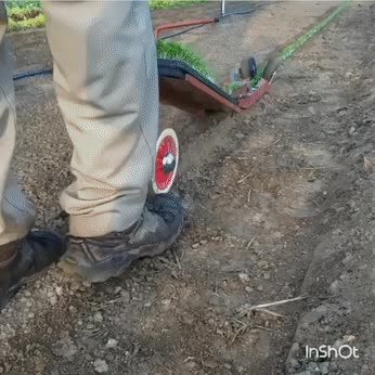 reversegif, Removing low quality seedlings GIFs