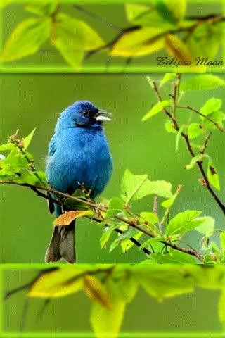 Watch and share Blue Bird GIFs on Gfycat