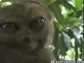Watch and share Lemur GIFs on Gfycat