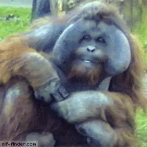 Watch Orangutan Chews Bubble Gum GIF on Gfycat. Discover more related GIFs on Gfycat
