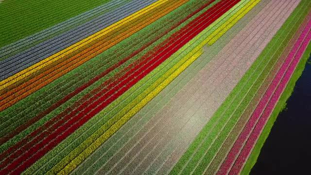 Watch Droning Dutchman - The Netherlands in bloom (Mavic Pro 4K) GIF on Gfycat. Discover more dji, drone, mavic GIFs on Gfycat