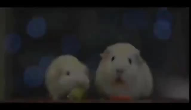 Watch and share Guinea Pig Vietnam Flashback GIFs on Gfycat
