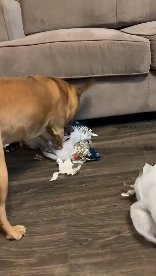 Watch and share Laurendrainfit 2018-12-25 15:59:40.368 GIFs by Pams Fruit Jam on Gfycat