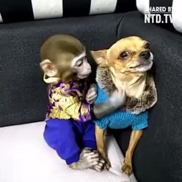 Monkey Kisses The Dog Gif Find Make Share Gfycat Gifs