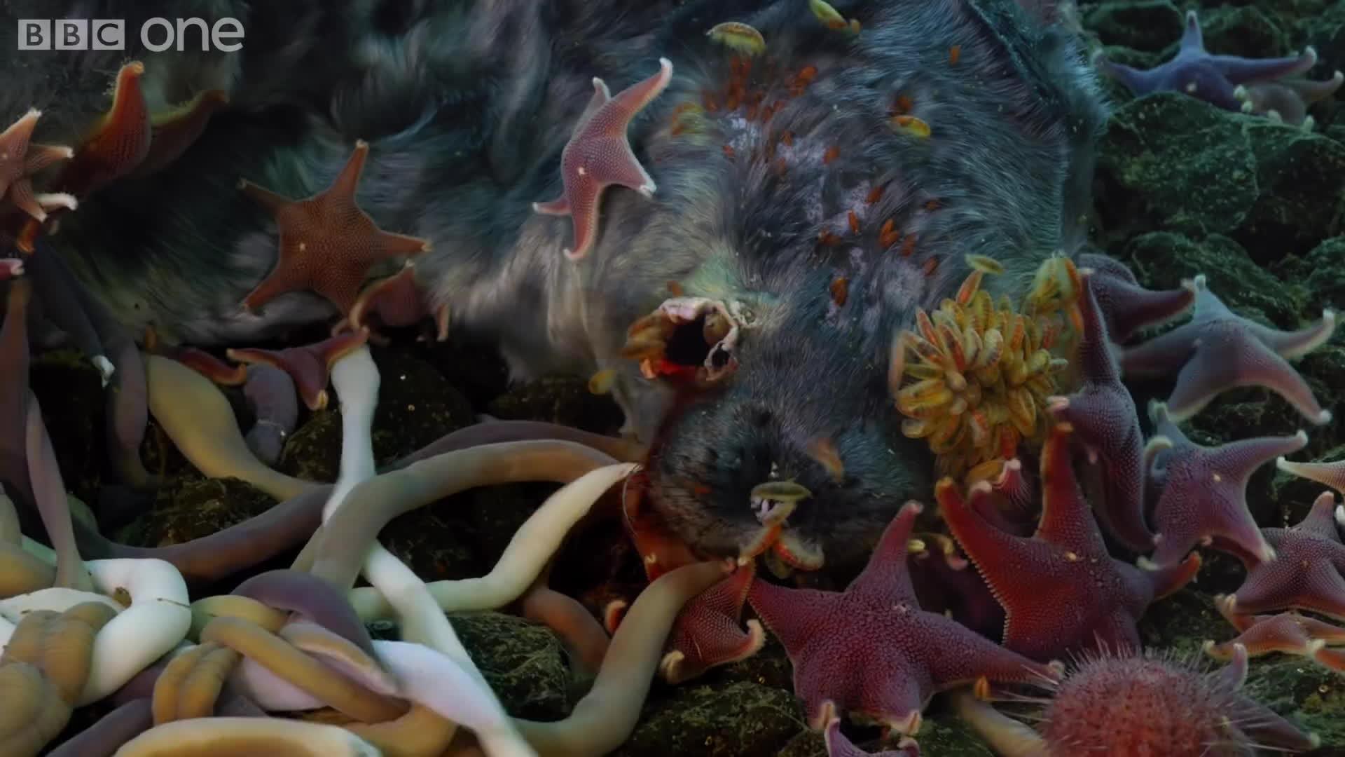 natureismetal, Timelapse: Sea creatures feasting GIFs