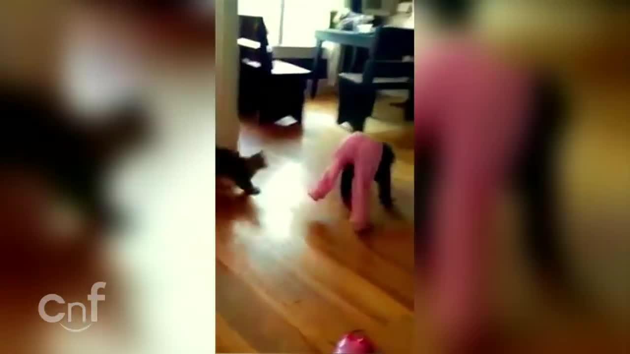 attack, cat (animal), catsmurderingtoddlers, Revenge of the Kitten GIFs