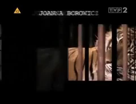 Watch and share Fort Boyard   Sezon 1 Odcinek 1 GIFs on Gfycat