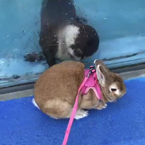 Otter, So Cute! Credit: https://www.instagram.com/iseseaparadise/ GIFs