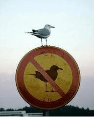 Watch and share No Seagulls Seagull Sea Gull Deal With It GIFs on Gfycat