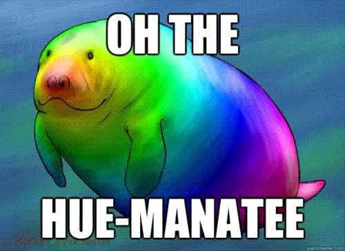 Watch and share Post The Hue Manatee CI GIFs on Gfycat