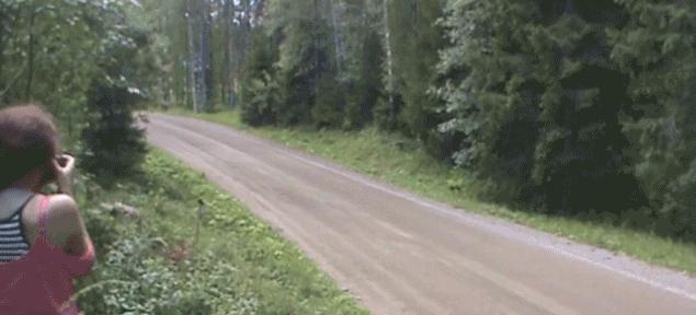 Finland GIFs