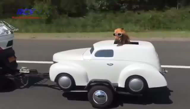 Dog on a ride GIFs