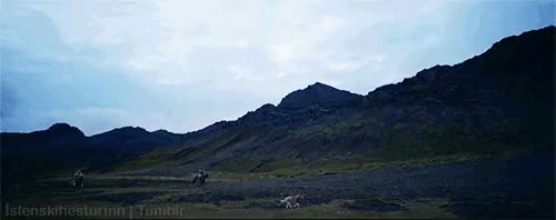 Watch Icelandic horses GIF on Gfycat. Discover more *mystuff, Iceland, Icelandic horse, Icelandic horses, gaited horse, horses, shame there weren't more shots of it :(, the first is definitely a tölt GIFs on Gfycat