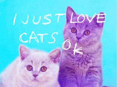Watch and share Alley Cat Allies GIFs and Blind Cat Rescue GIFs on Gfycat