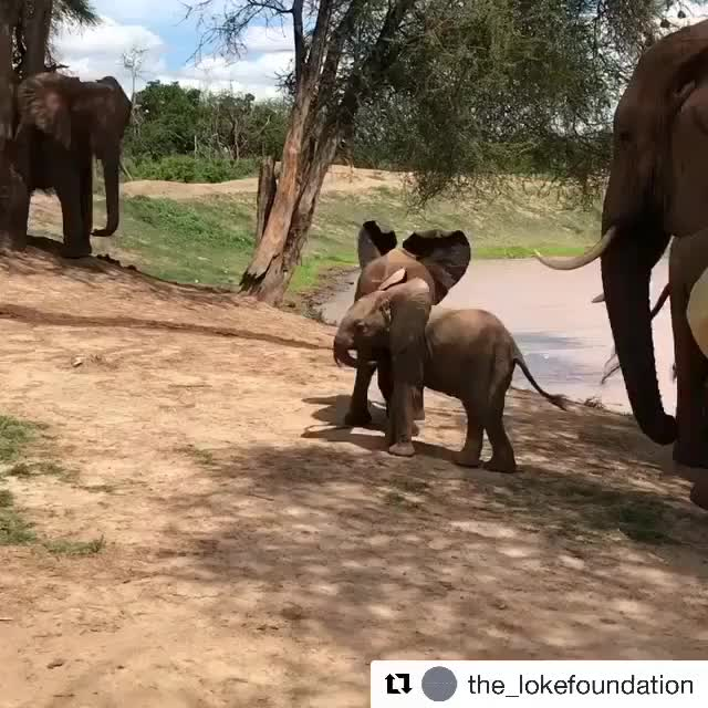 Watch Video by dswt GIF on Gfycat. Discover more babyelephantgifs GIFs on Gfycat