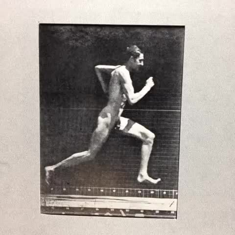 Watch Eadweard Muybridge #running #stopmotion #loop GIF by @121gigawatt on Gfycat. Discover more related GIFs on Gfycat