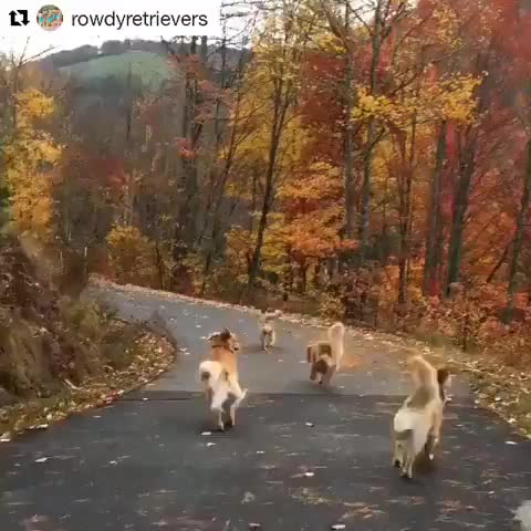 Source:  Rowdyretrievers on instagram GIFs