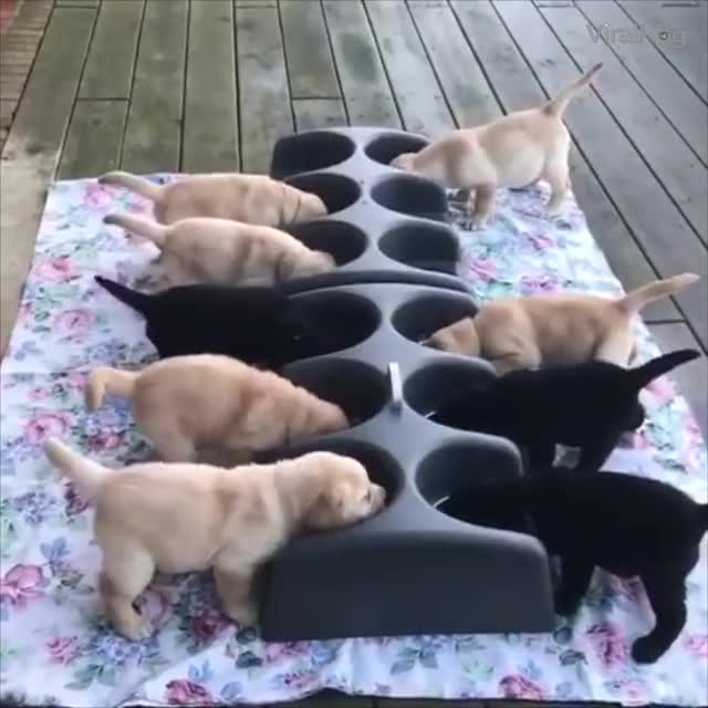 Watch and share Puppies GIFs by newisland on Gfycat