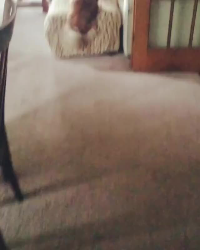 Watch POM TIPPY TAPS! GIF by @rumblingspires on Gfycat. Discover more related GIFs on Gfycat