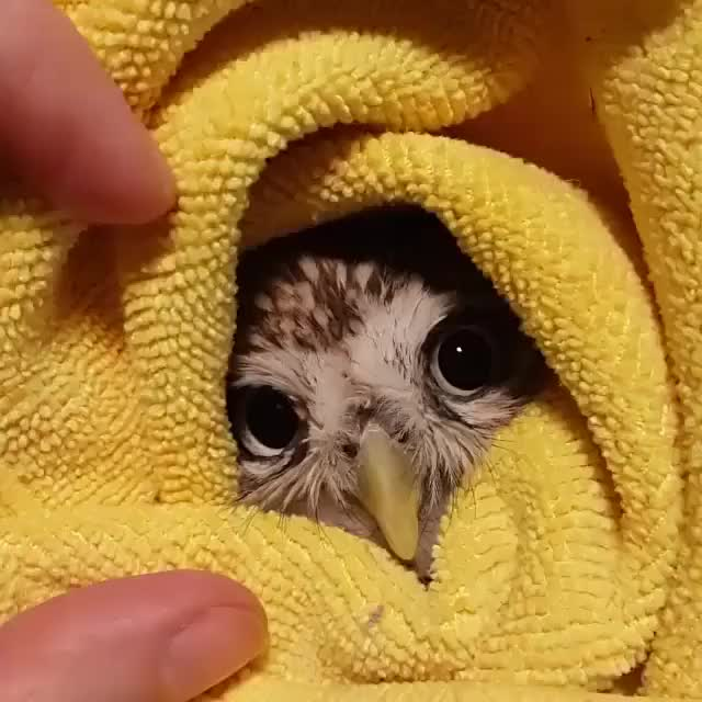 Watch Snug as an owl in a towel. GIF by Hanna (@hannax) on Gfycat. Discover more related GIFs on Gfycat