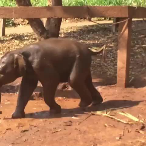 Watch slippin and slidin in the mud GIF by vani  (@uncommonvanilla) on Gfycat. Discover more babyelephants, constanza von stülpnagel, iloveelephants, pataraelephantfarm GIFs on Gfycat