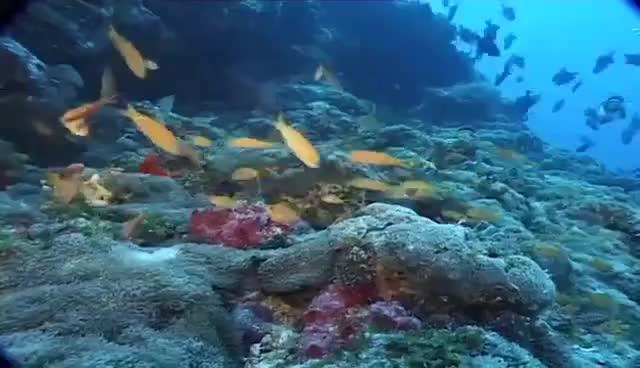 Watch Maldivas: el paraíso del buceo (documental completo) GIF on Gfycat. Discover more related GIFs on Gfycat