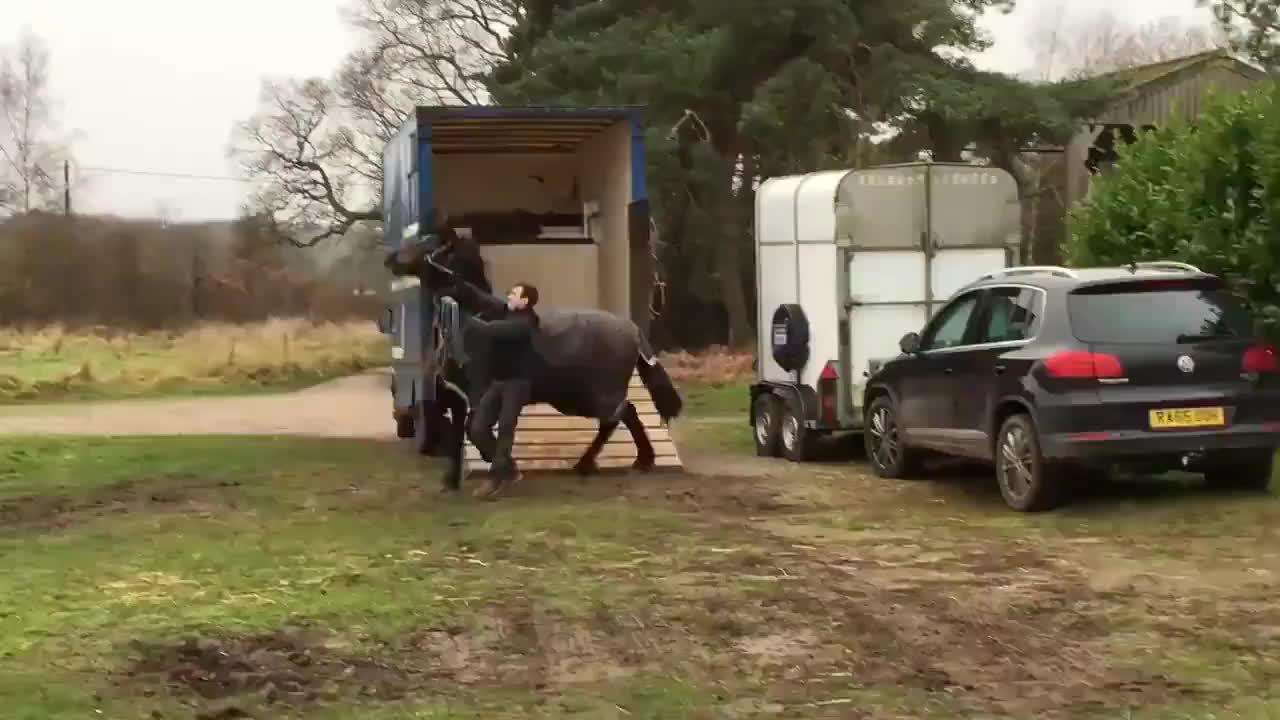 maybemaybemaybe, nonononoyes, MAN USES CLEVER TACTIC TO HALT RUNAWAY HORSE GIFs