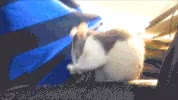 Watch and share Furball GIFs on Gfycat