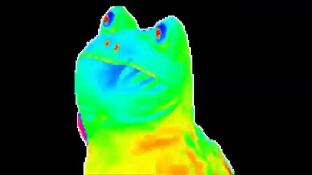 Watch and share Rainbow Frog GIFs on Gfycat