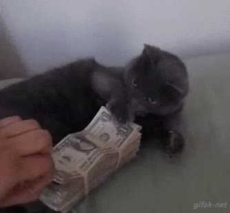 Watch and share Money GIFs and Cash GIFs on Gfycat