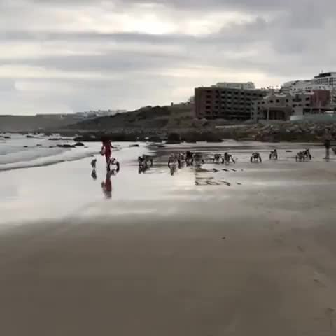 So Tangier had a handicapped dog beach meetup... GIFs