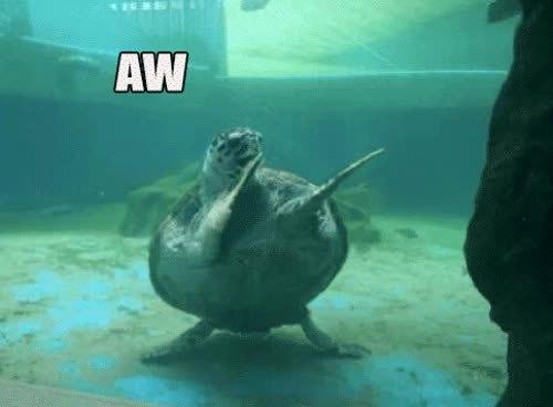 bday, turtle, Bday Turtle GIFs