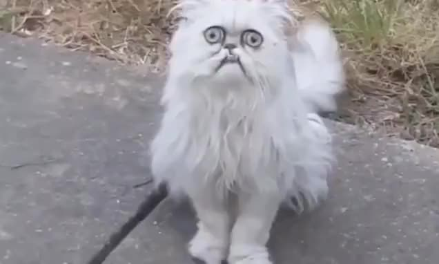 Watch and share Wilfred GIFs and Cat GIFs by Vinegret on Gfycat