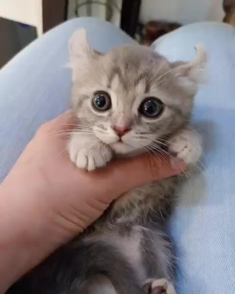 Watch and share Catsofinsta GIFs and Munchkincat GIFs by notmyproblem on Gfycat