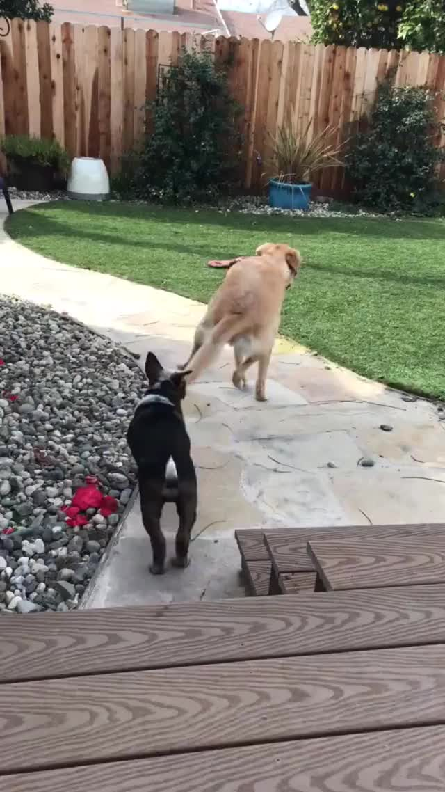 Watch and share Puppy GIFs and Dogs GIFs on Gfycat