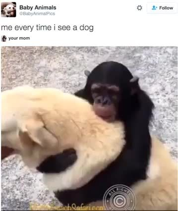 dog, funny, monkey,  GIFs