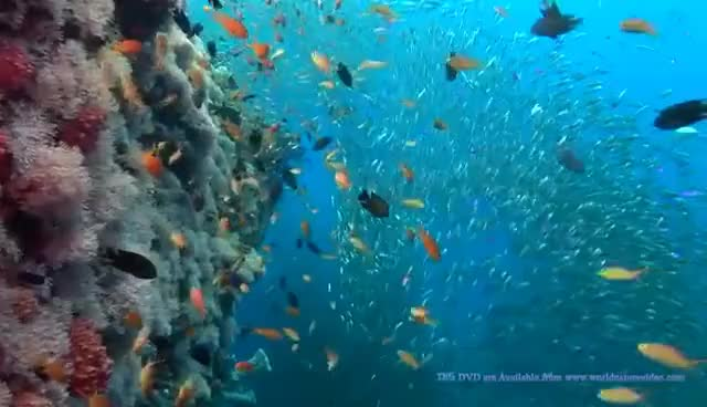 Watch and share OCEAN DREAMING DVD - Relaxing Nature Scenes Of The Underwater GIFs on Gfycat