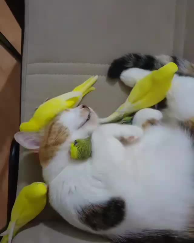 Watch and share Snuggle Time GIFs by MyNameGifOreilly on Gfycat