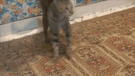 Watch Twinkle Toes GIF on Gfycat. Discover more gifs GIFs on Gfycat