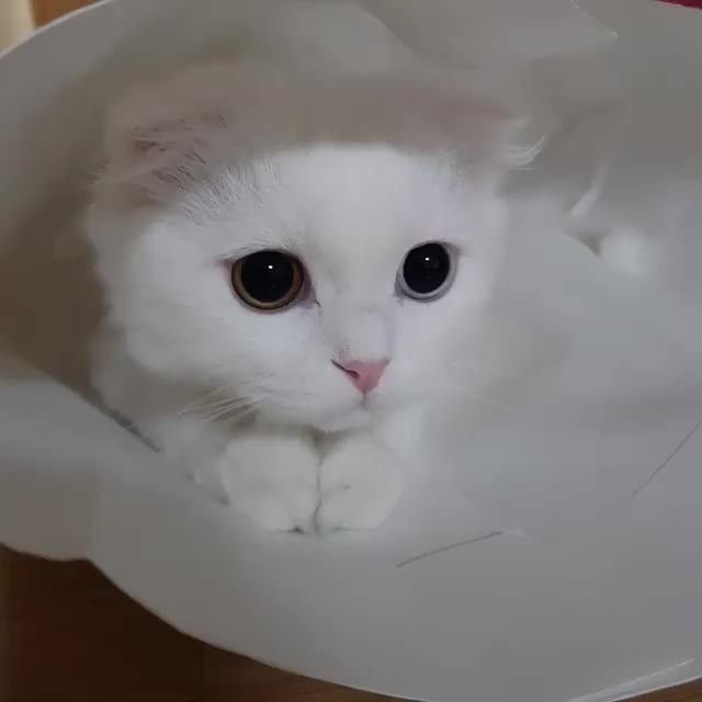 Watch and share Cat GIFs by Koleandra on Gfycat