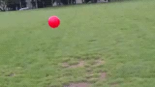 Watch dog is up up and away chasing red ball GIF on Gfycat. Discover more related GIFs on Gfycat