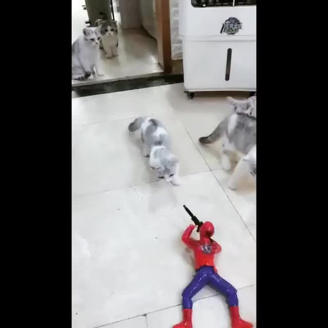 Watch and share Spidermancat GIFs on Gfycat