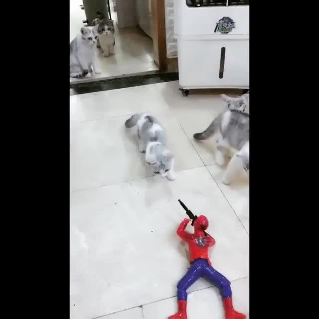 Spidermancat GIFs