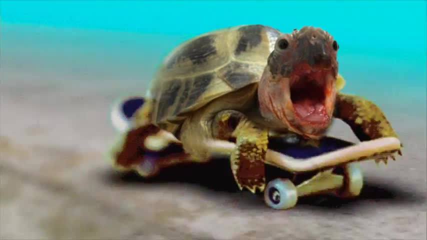 Turtle on a skateboard GIFs